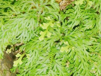 台-世界上有趣的植物